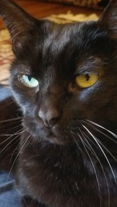 A Tribute To My Beautiful Cat, Angel