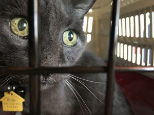 8 Tips to Make Travel and Vet Visits Less Stressful For Your Cat