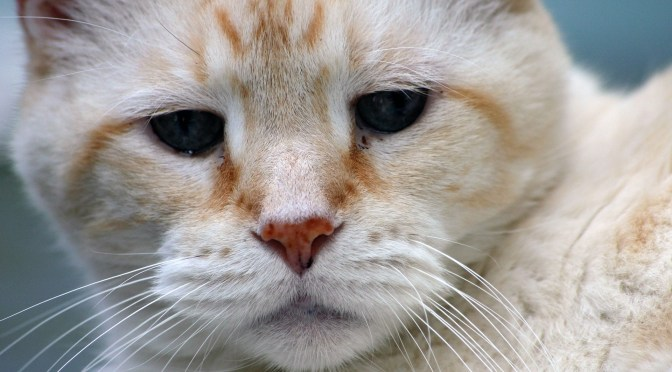 How to Provide the Best Care for Your Senior Cat