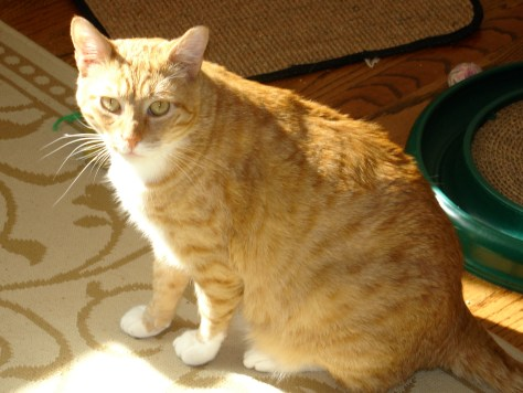 A TRIBUTE TO MY BELOVED, BEAUTIFUL CAT MARCELLO