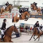 ♥ Paarden