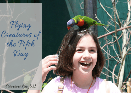 Flying Creatures of the Fifth Day Curriculum Review