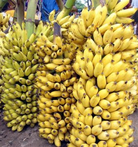 anemia, banana