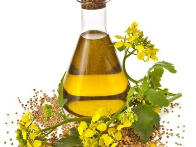 Health benefits of canola oil