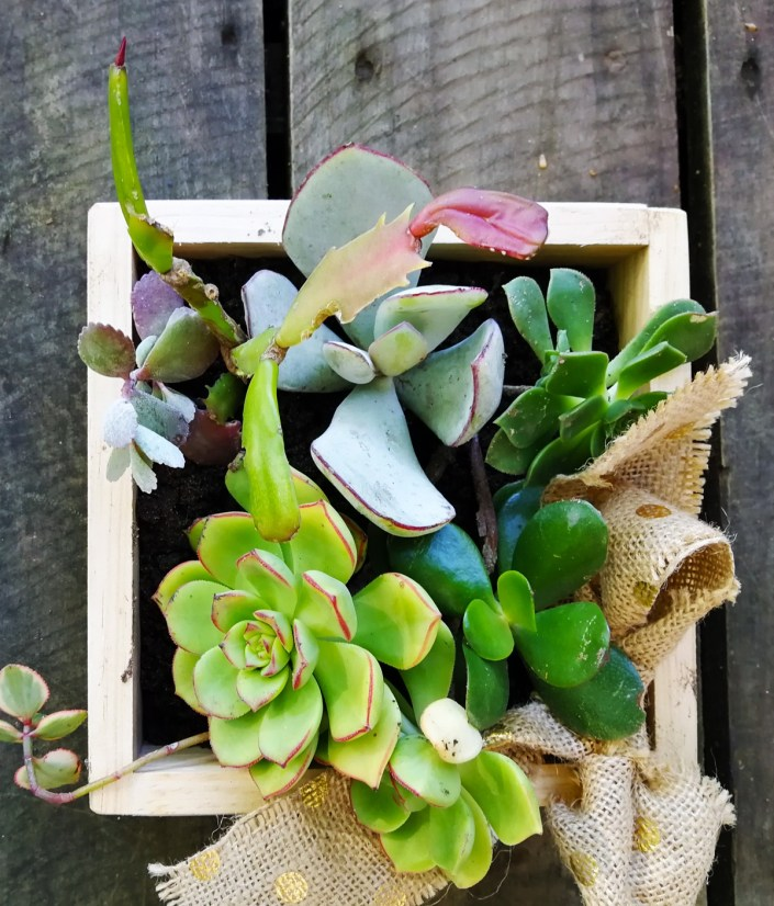 succulent box easy diy christmas gift idea