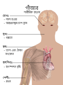 গাঁজার প্রভাব Bodily_effects_of_cannabis_bn