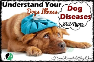 Dog Diseases – Full List of Dog Diseases (802) from A to Z