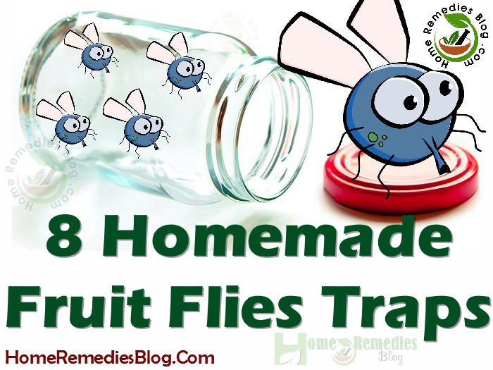 8 Diy Homemade Traps To Get Rid Of Fruit Flies Home Remedies Blog