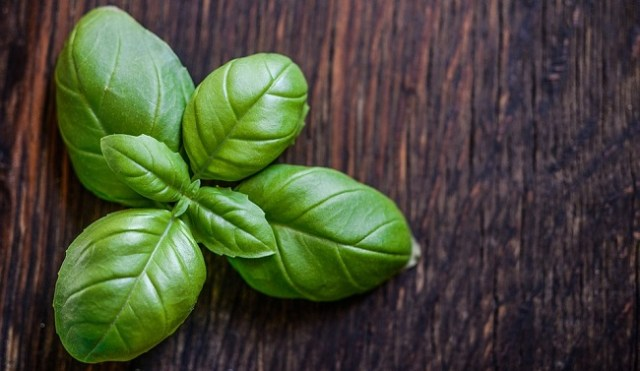 Basil Leaf Cream For Vaginal Itching Treatment