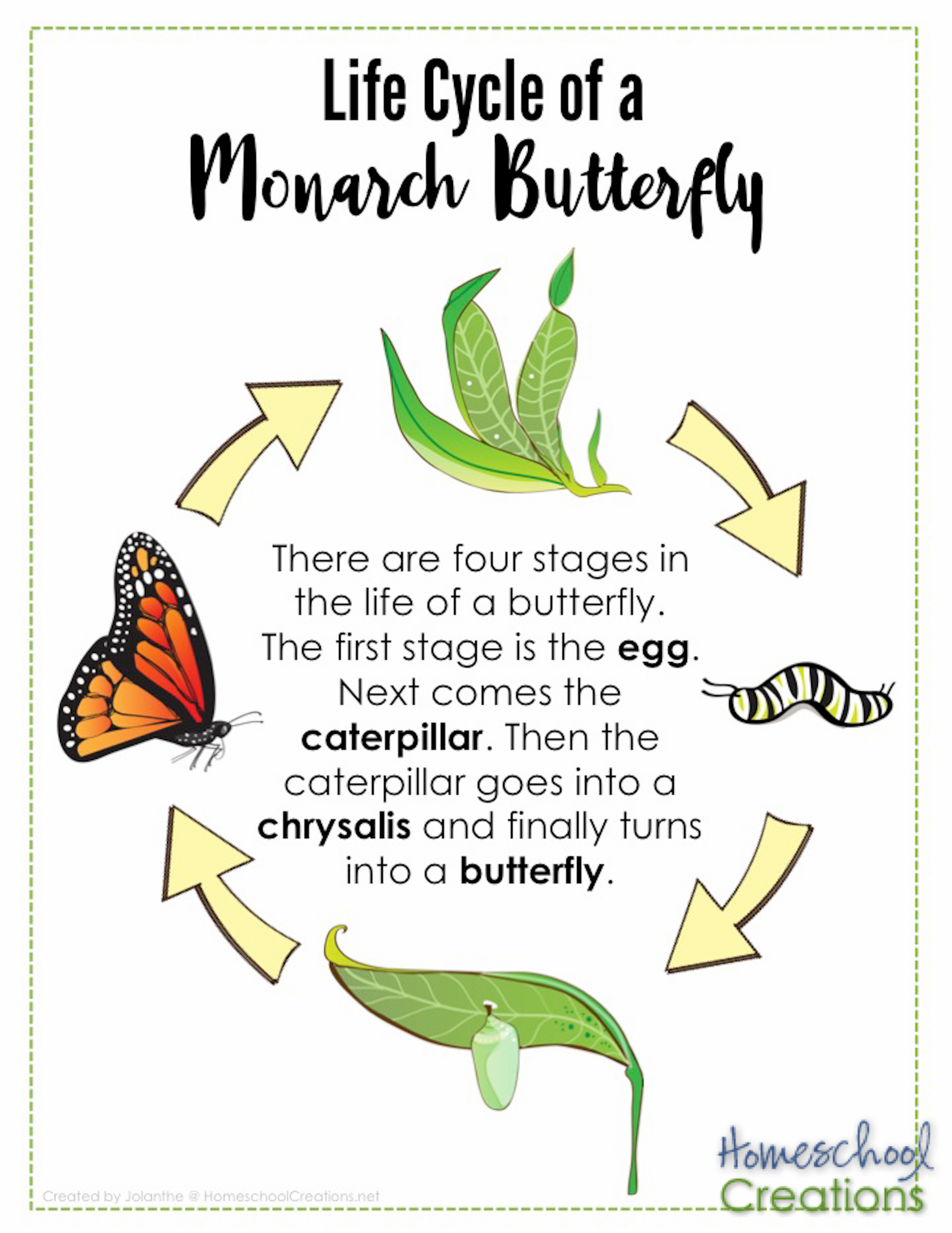 Life Cycle Of Monarch Butterfly Poster Homeschoolcreations