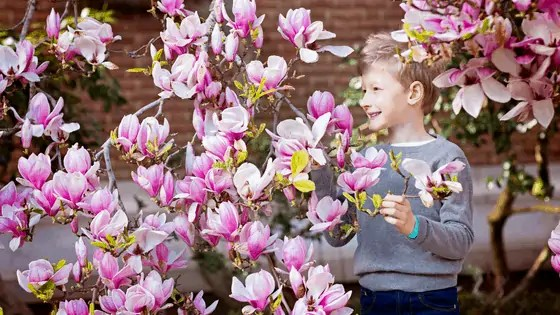 Creative activities for spring