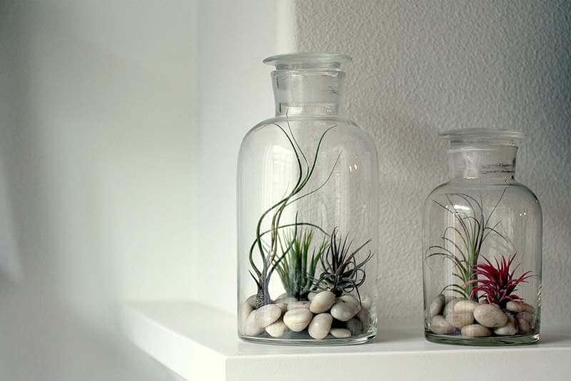 Doe je luchtplantje in een glazen pot of fles   9 makkelijke diy tips voor luchtplantjes in huis   www.homeseeds.nl