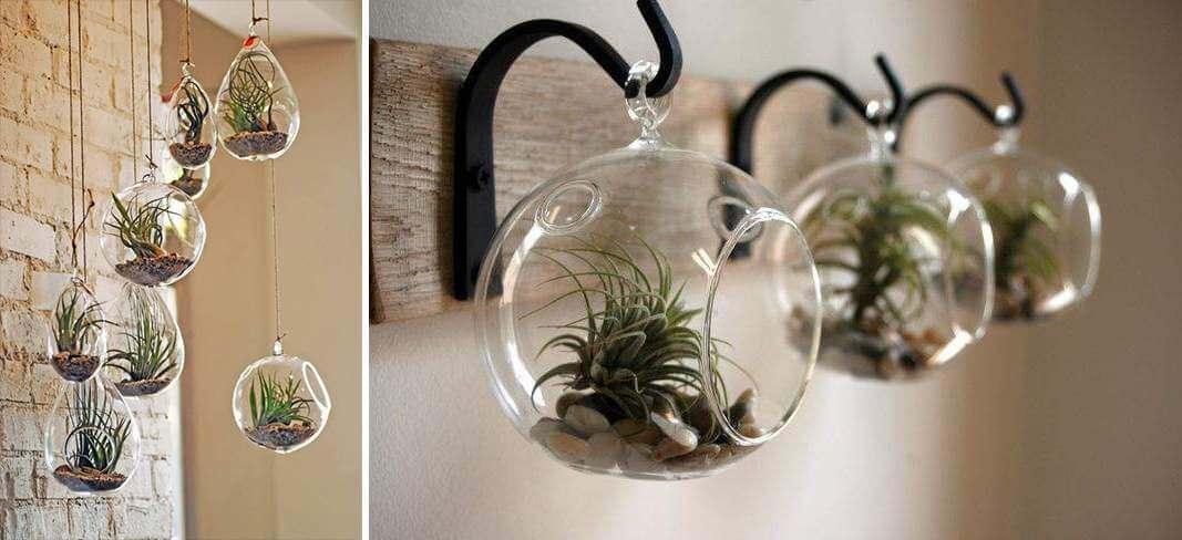hang luchtplantjes in een glazen bol aan het plafond   9 eenvoudige diy tips voor luchtplantjes in huis   www.homeseeds.nl