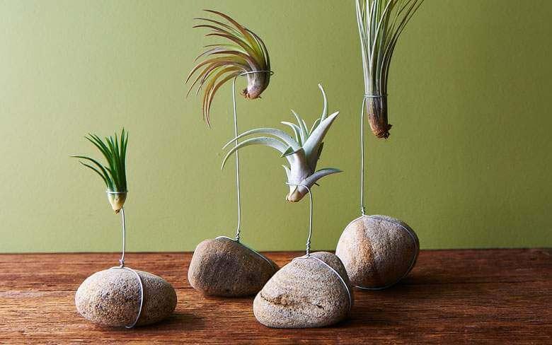 DIY tips voor luchtplantjes op stenen | 9 inspiratie tips voor luchtplanten in huis | www.homeseeds.nl