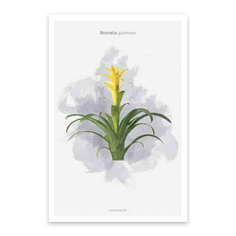 Botanische poster bromelia plant | www.homeseeds.nl