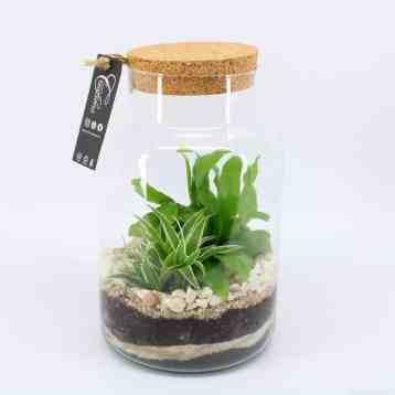 plantenterrarium DIY do it yourself met varenachtigen