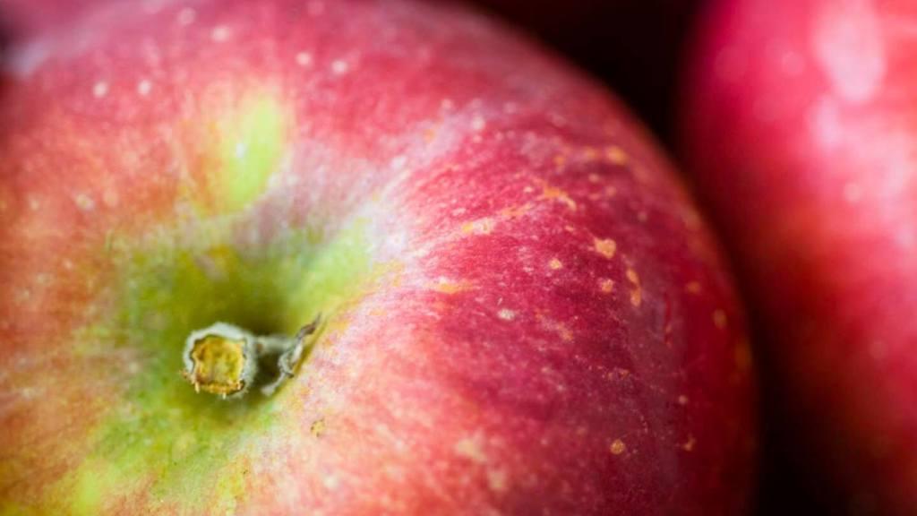 Ancho chile applesauce | Homesick Texan