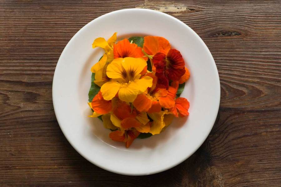 Texas potato salad with nasturtiums | Homesick Texan
