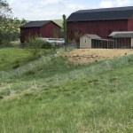 coops, runs and pasture