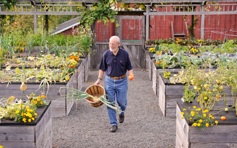 Unique Raised Vegetable Garden
