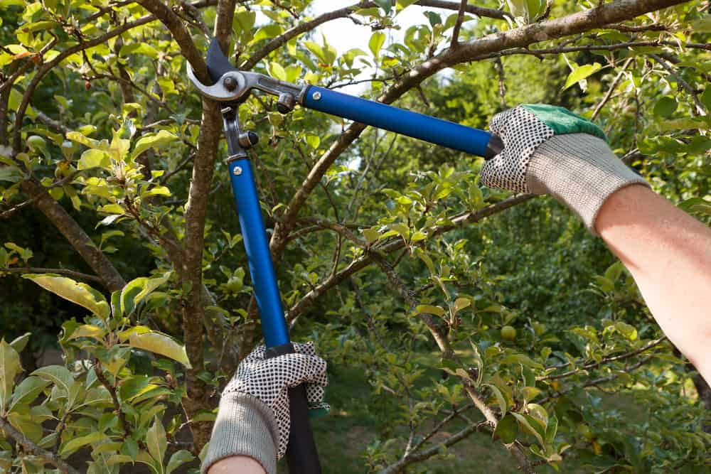 25 Tools For Pruning Flowers Plants Trees And Bushes
