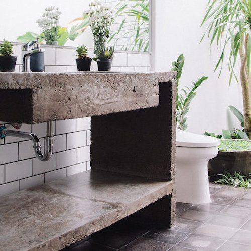 kaktus w łazience