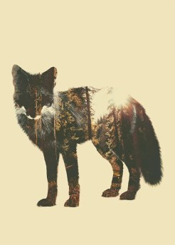 Poster Forest Fox