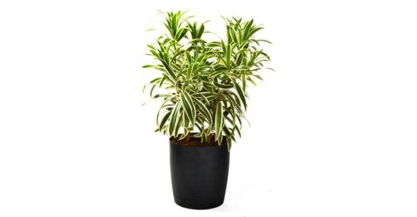 indoor plants (2)