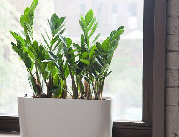 indoor plants (3)
