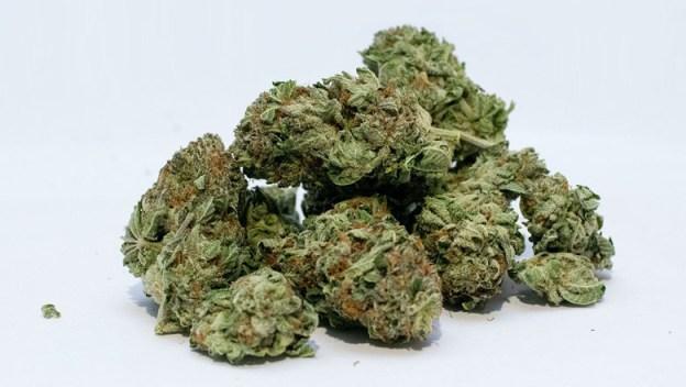 weed-marijuana-pot-drugs-web