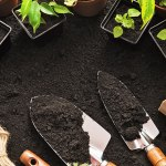 Garden Matters: Fall gardening bring benefits to spring flowers