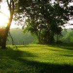 Perth Healing Forest Memorial unveiling Last Duel Park