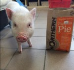 Laura Jane's Pet Food & Supplies