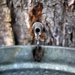 Learn more about maple syrup production at LDMSPA's Information Day and AGM, January 26
