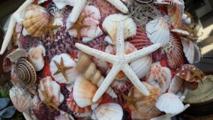 shells on table