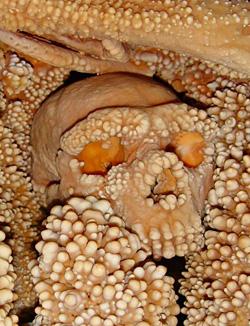 Crâne du néandertalien d'Altamura