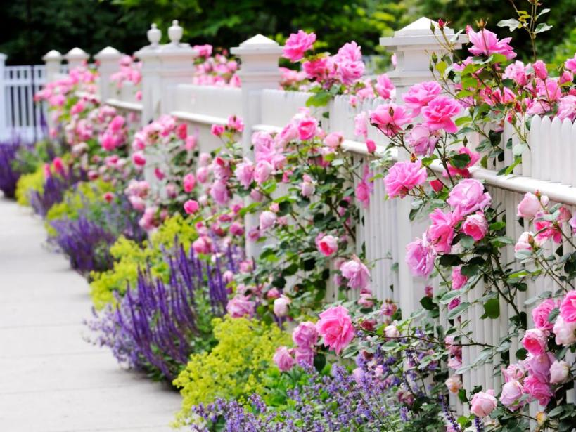 Rosy Landspace for Your Front Yard