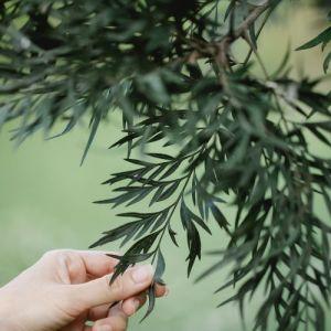 Toucher avec délicatesse les feuilles d'un arbre