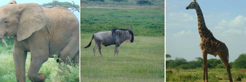 Parque Nacional de Sanburu