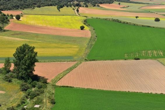 Texturas y colores del campo castellano