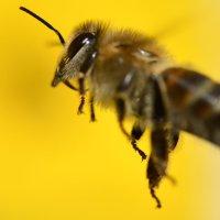 هل تعلم بالتداوي بالحشرات و الحيوانات؟!