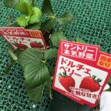 家庭菜園におすすめ!簡単に育つ野菜を紹介。