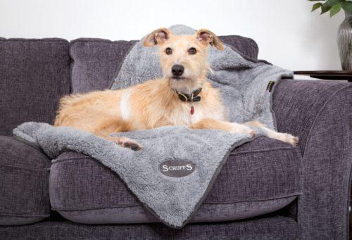 Scruffs deken grijs hond