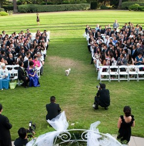 hond als ringendrager 294x300 Je hond bij je huwelijk