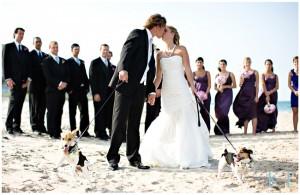 hond op bruiloft 300x195 Je hond bij je huwelijk