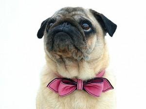 strikje bruiloft hond 300x224 Je hond bij je huwelijk