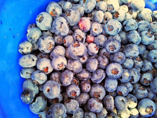 Bucket filled with blueberries