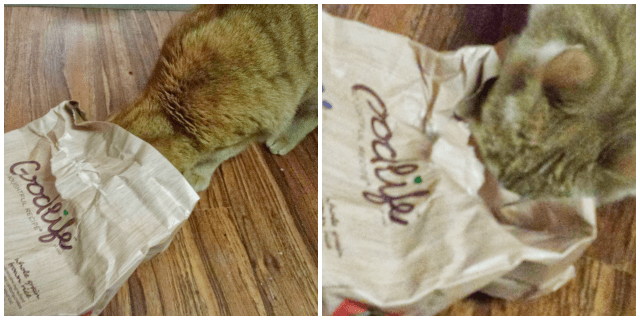 Cats opened the bag of cat food by themselves