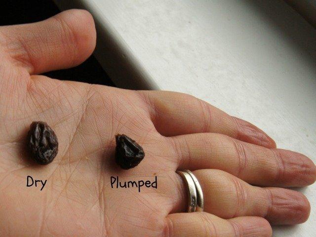 Plump and dry raisins