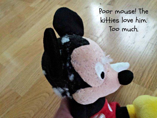 Kitty bit mouse